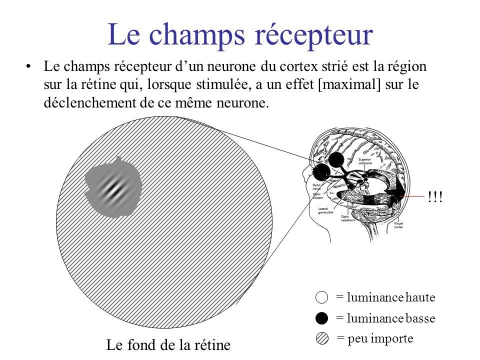 Le champs récepteur Le champs récepteur dun neurone du cortex strié est la région sur la rétine qui, lorsque stimulée, a un effet [maximal] sur le déc