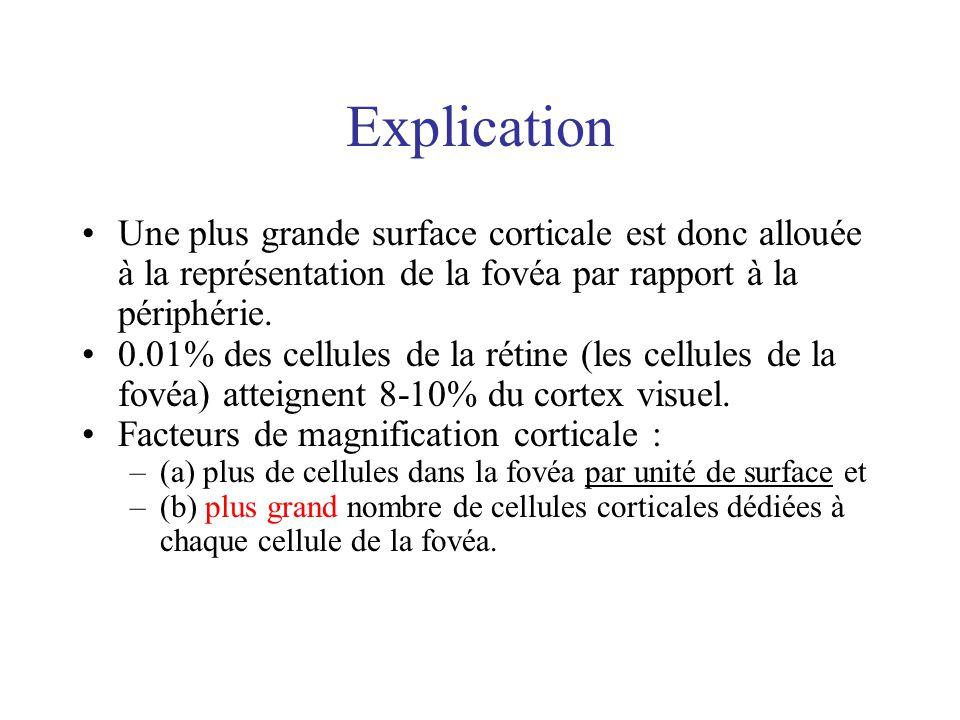 Explication Une plus grande surface corticale est donc allouée à la représentation de la fovéa par rapport à la périphérie. 0.01% des cellules de la r