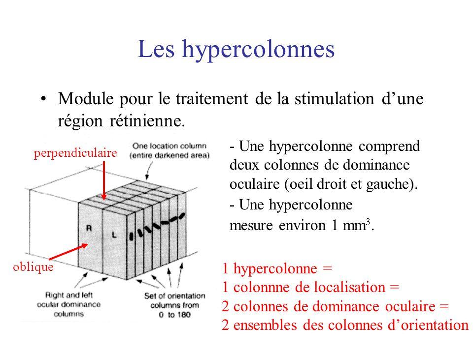 Les hypercolonnes Module pour le traitement de la stimulation dune région rétinienne. - Une hypercolonne comprend deux colonnes de dominance oculaire