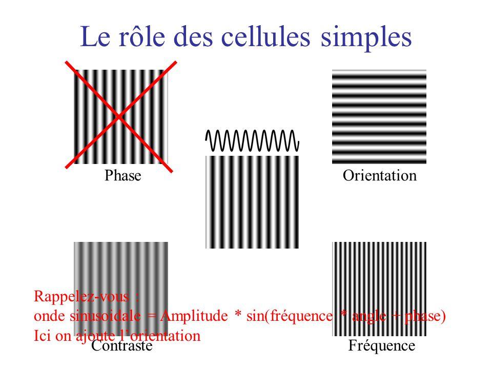 Le rôle des cellules simples Orientation Fréquence Phase Contraste Rappelez-vous : onde sinusoidale = Amplitude * sin(fréquence * angle + phase) Ici o