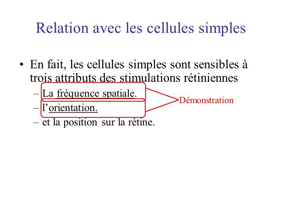 Relation avec les cellules simples En fait, les cellules simples sont sensibles à trois attributs des stimulations rétiniennes –La fréquence spatiale.