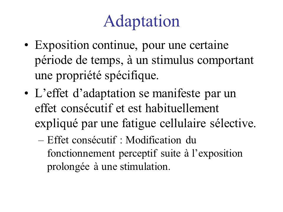 Adaptation Exposition continue, pour une certaine période de temps, à un stimulus comportant une propriété spécifique. Leffet dadaptation se manifeste