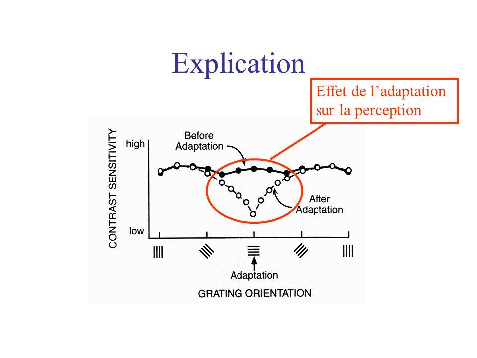 Explication Effet de ladaptation sur la perception