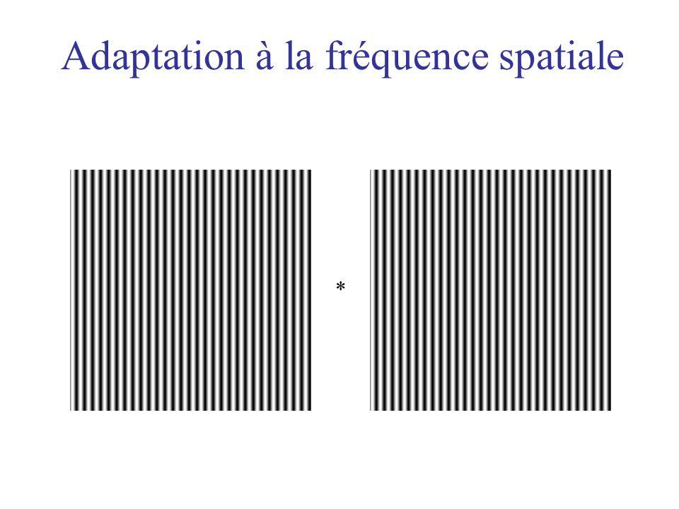 Adaptation à la fréquence spatiale *