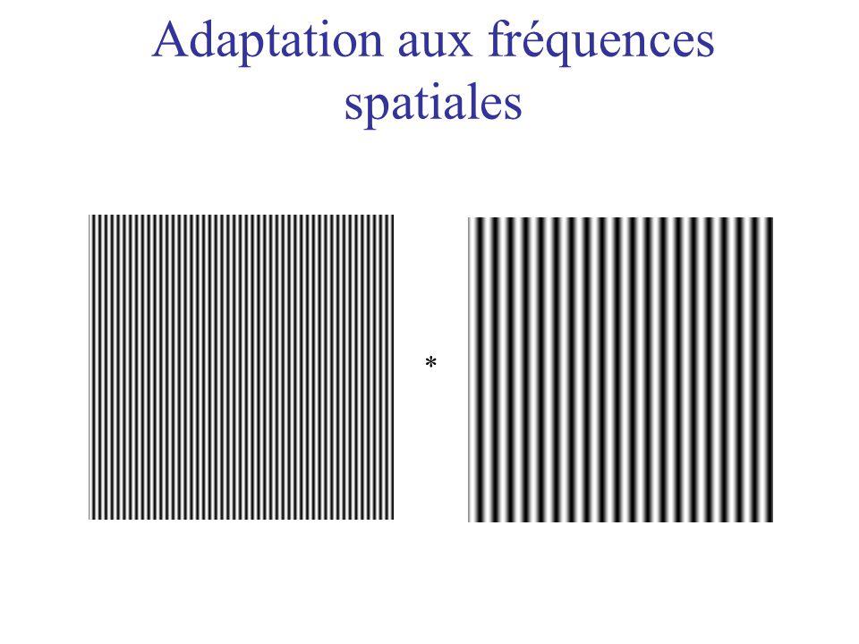 Adaptation aux fréquences spatiales *