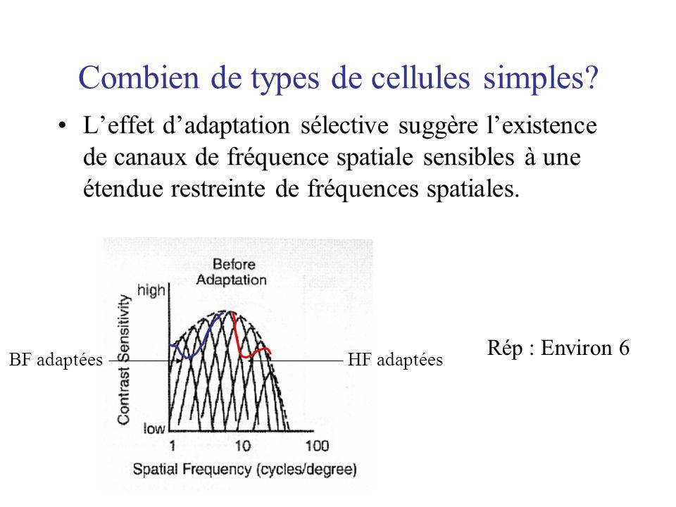 Combien de types de cellules simples? Leffet dadaptation sélective suggère lexistence de canaux de fréquence spatiale sensibles à une étendue restrein