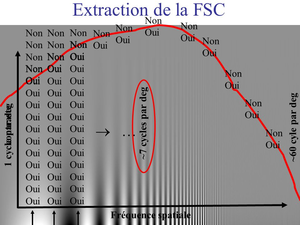 Extraction de la FSC 1 cycle par deg ~60 cyle par deg ~7 cycles par deg Fréquence spatiale contraste Non Oui … Non Oui Non Oui Non Oui Non Oui Non Oui