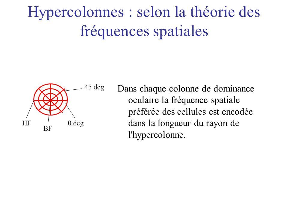 Hypercolonnes : selon la théorie des fréquences spatiales HF BF 0 deg 45 deg Dans chaque colonne de dominance oculaire la fréquence spatiale préférée
