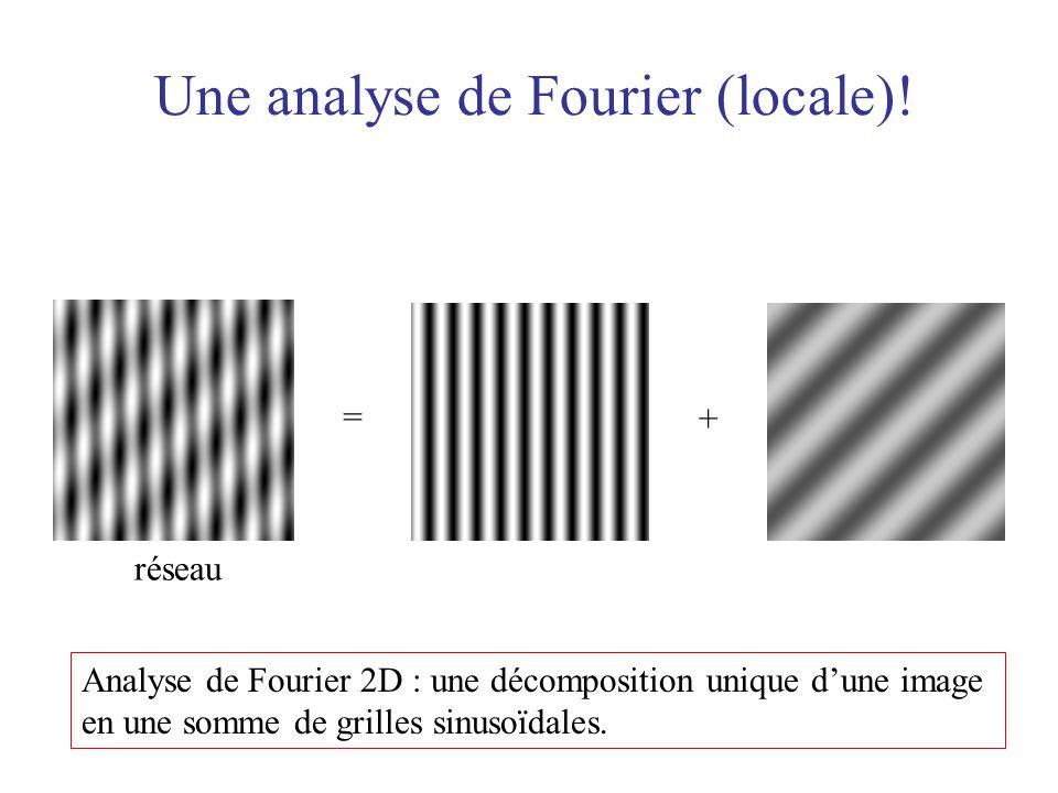 = réseau + Analyse de Fourier 2D : une décomposition unique dune image en une somme de grilles sinusoïdales. Une analyse de Fourier (locale)!
