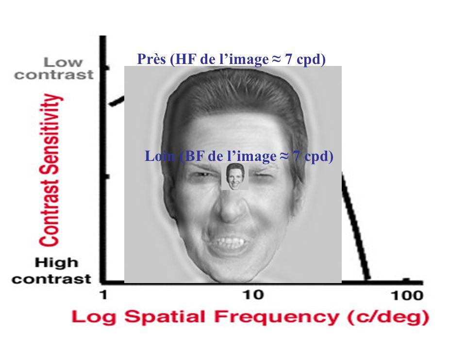 Près (HF de limage 7 cpd) Loin (BF de limage 7 cpd)