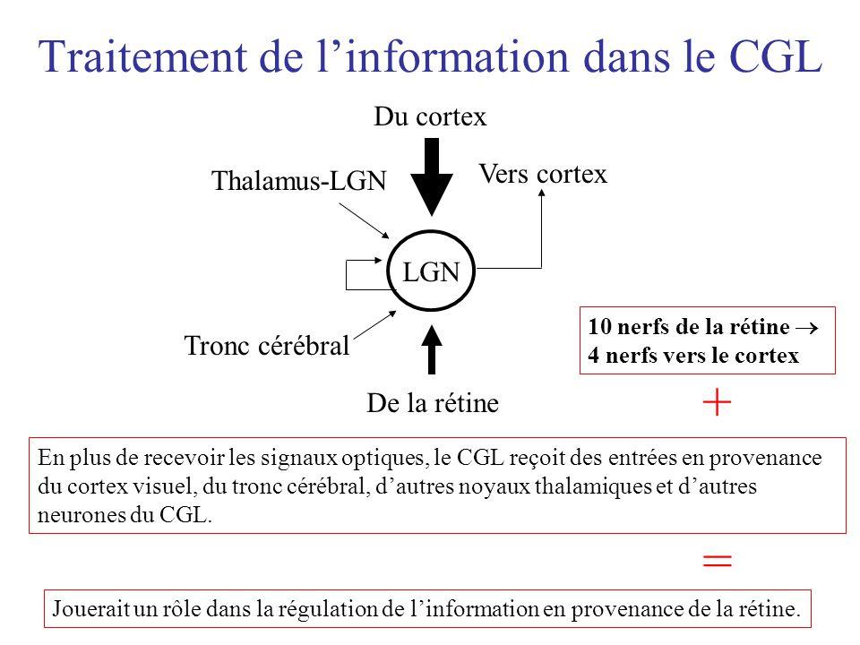 Les champs récepteurs du CGL Le champs récepteur dun neurone du CGL est une région sur la rétine qui, lorsque stimulée, permet le déclenchement de ce même neurone du CGL (Goldstein, 2001) = luminance haute = luminance basse Le fond de la rétine = peu importe