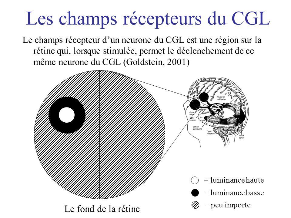 Les champs récepteurs du CGL Le champs récepteur dun neurone du CGL est une région sur la rétine qui, lorsque stimulée, permet le déclenchement de ce