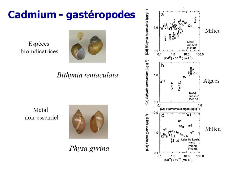 Cadmium - gastéropodes Bithynia tentaculata Physa gyrina Algues Espèces bioindicatrices Milieu Métal non-essentiel
