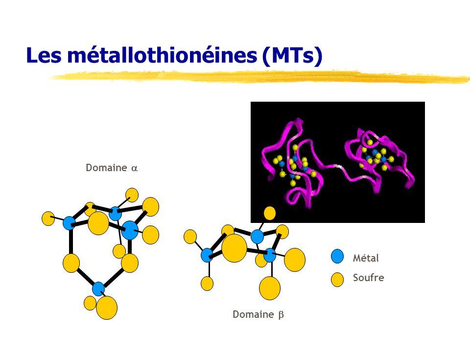 Les métallothionéines (MTs) Domaine Métal Soufre