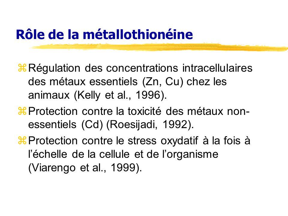 Rôle de la métallothionéine zRégulation des concentrations intracellulaires des métaux essentiels (Zn, Cu) chez les animaux (Kelly et al., 1996).