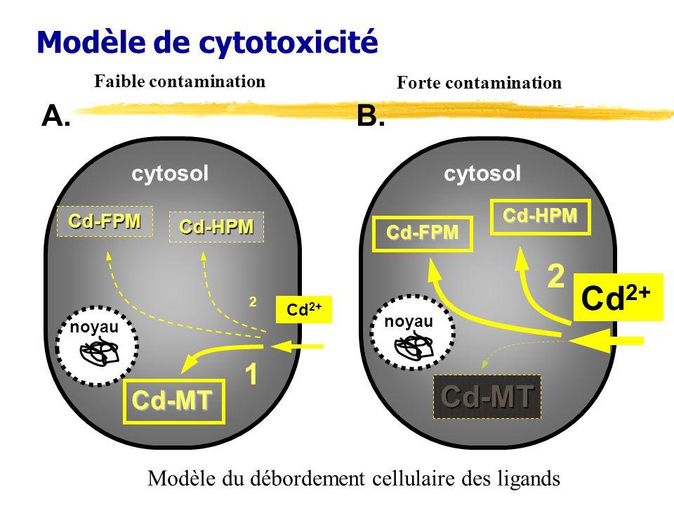 Modèle de cytotoxicité Cd-MT 1 Cd-FPM 2 noyau cytosol A.Cd-HPM Cd 2+ B.Cd-MT Cd-FPM 2 noyau cytosol Cd 2+ Cd-HPM Modèle du débordement cellulaire des ligands Faible contamination Forte contamination