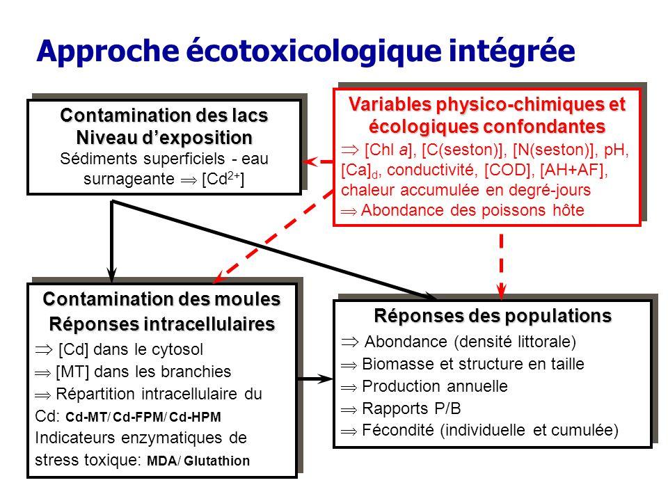 Approche écotoxicologique intégrée Variables physico-chimiques et écologiques confondantes [Chl a], [C(seston)], [N(seston)], pH, [Ca] d, conductivité, [COD], [AH+AF], chaleur accumulée en degré-jours Abondance des poissons hôte Variables physico-chimiques et écologiques confondantes [Chl a], [C(seston)], [N(seston)], pH, [Ca] d, conductivité, [COD], [AH+AF], chaleur accumulée en degré-jours Abondance des poissons hôte Réponses des populations Abondance (densité littorale) Biomasse et structure en taille Production annuelle Rapports P/B Fécondité (individuelle et cumulée) Réponses des populations Abondance (densité littorale) Biomasse et structure en taille Production annuelle Rapports P/B Fécondité (individuelle et cumulée) Contamination des moules Réponses intracellulaires [Cd] dans le cytosol [MT] dans les branchies Répartition intracellulaire du Cd: Cd-MT/ Cd-FPM/ Cd-HPM Indicateurs enzymatiques de stress toxique: MDA/ Glutathion Contamination des moules Réponses intracellulaires [Cd] dans le cytosol [MT] dans les branchies Répartition intracellulaire du Cd: Cd-MT/ Cd-FPM/ Cd-HPM Indicateurs enzymatiques de stress toxique: MDA/ Glutathion Contamination des lacs Niveau dexposition Sédiments superficiels - eau surnageante [Cd 2+ ] Contamination des lacs Niveau dexposition Sédiments superficiels - eau surnageante [Cd 2+ ]