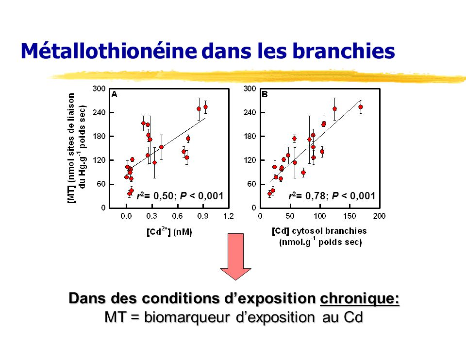 Métallothionéine dans les branchies r 2 = 0,78; P < 0,001r 2 = 0,50; P < 0,001 Dans des conditions dexposition chronique: MT = biomarqueur dexposition au Cd