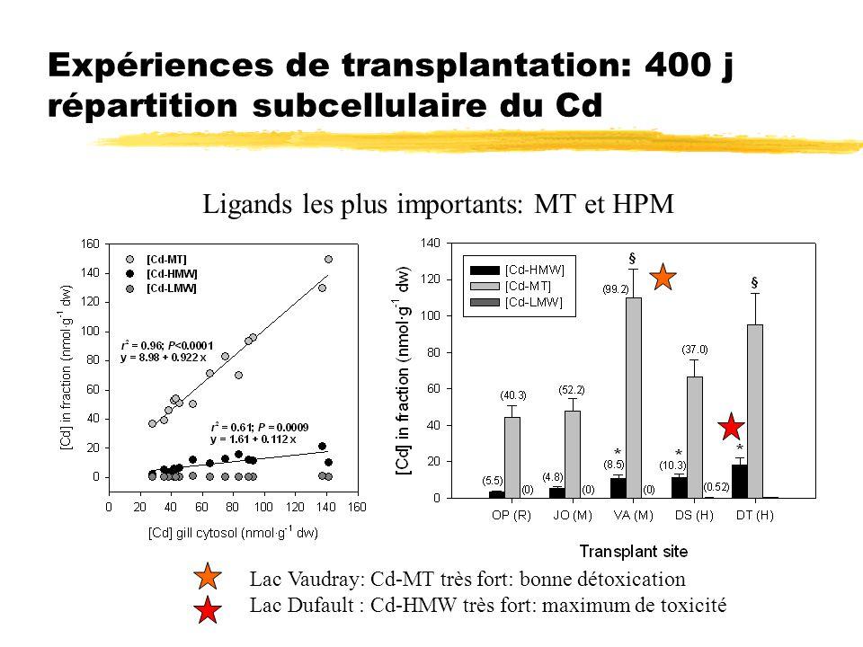 Expériences de transplantation: 400 j répartition subcellulaire du Cd Ligands les plus importants: MT et HPM Lac Vaudray: Cd-MT très fort: bonne détox