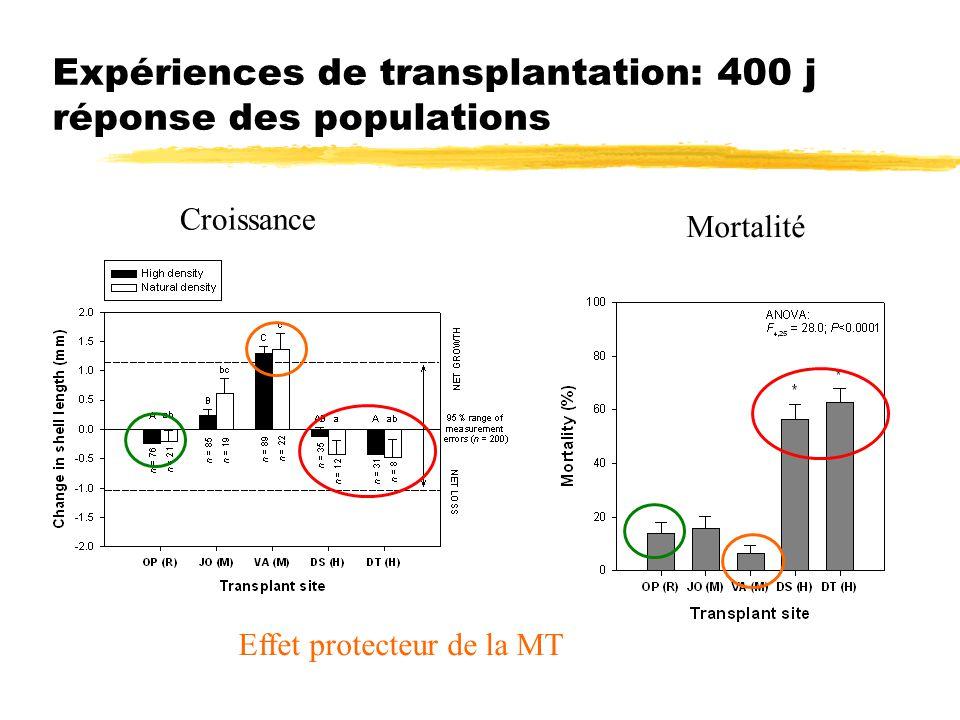 Expériences de transplantation: 400 j réponse des populations Croissance Mortalité Effet protecteur de la MT