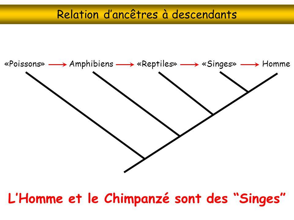 Relation dancêtres à descendants LHomme et le Chimpanzé sont des Singes «Singes»Homme«Reptiles»Amphibiens«Poissons»