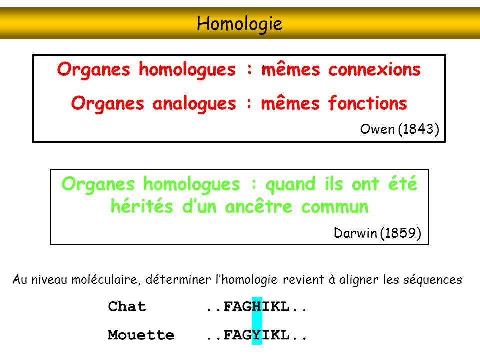 Au niveau moléculaire, déterminer lhomologie revient à aligner les séquences Chat..FAGHIKL.. Mouette..FAGYIKL.. Homologie Organes homologues : mêmes c