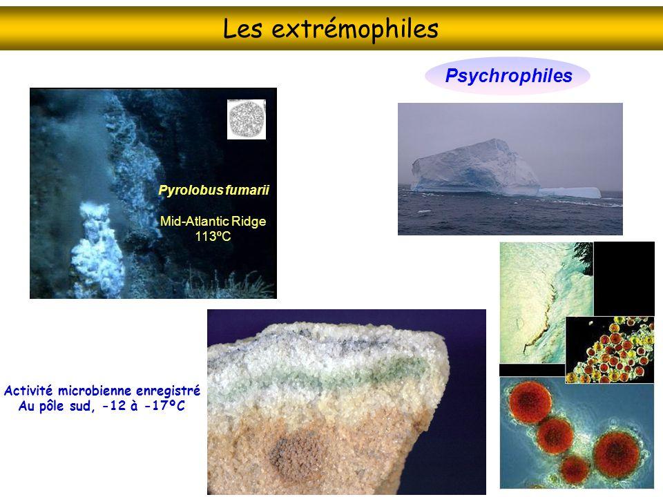 Lhistoire des spéciations : la phylogénie