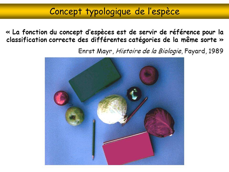 Concept typologique de lespèce « La fonction du concept despèces est de servir de référence pour la classification correcte des différentes catégories