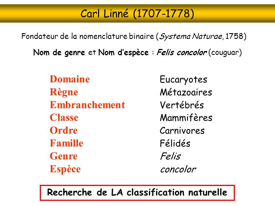 Carl Linné (1707-1778) Fondateur de la nomenclature binaire (Systema Naturae, 1758) Nom de genre et Nom despèce : Felis concolor (couguar) Domaine Euc