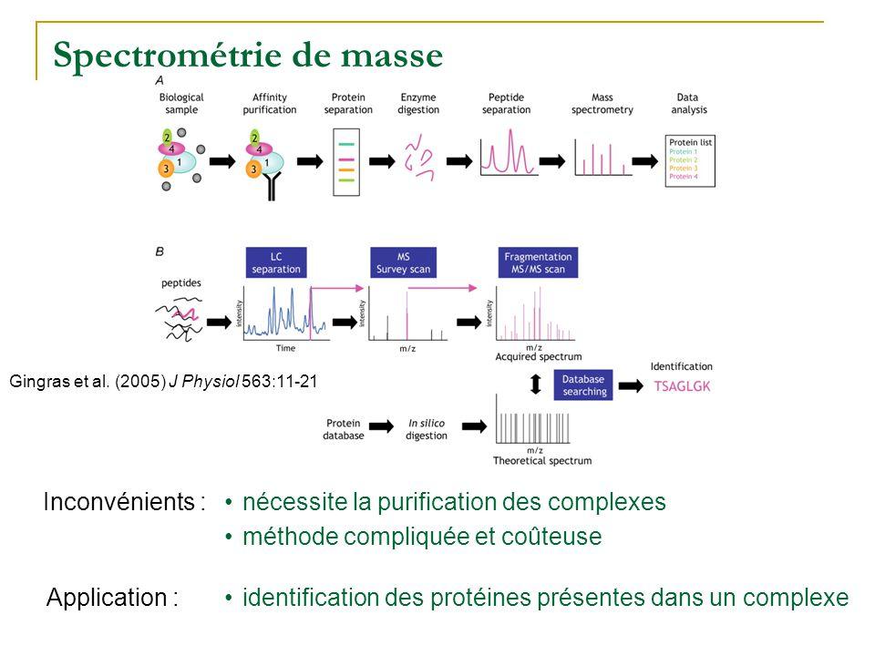 TAP-Tag : Tandem Affinity Purification seules les interactions très stables peuvent être détectées Inconvénients : seul lappât est modifié, pas les autres protéines du complexe taux dexpression biologique des protéines identification de complexes avec plus de 2 protéines Avantages : Application :identification des complexes protéiques