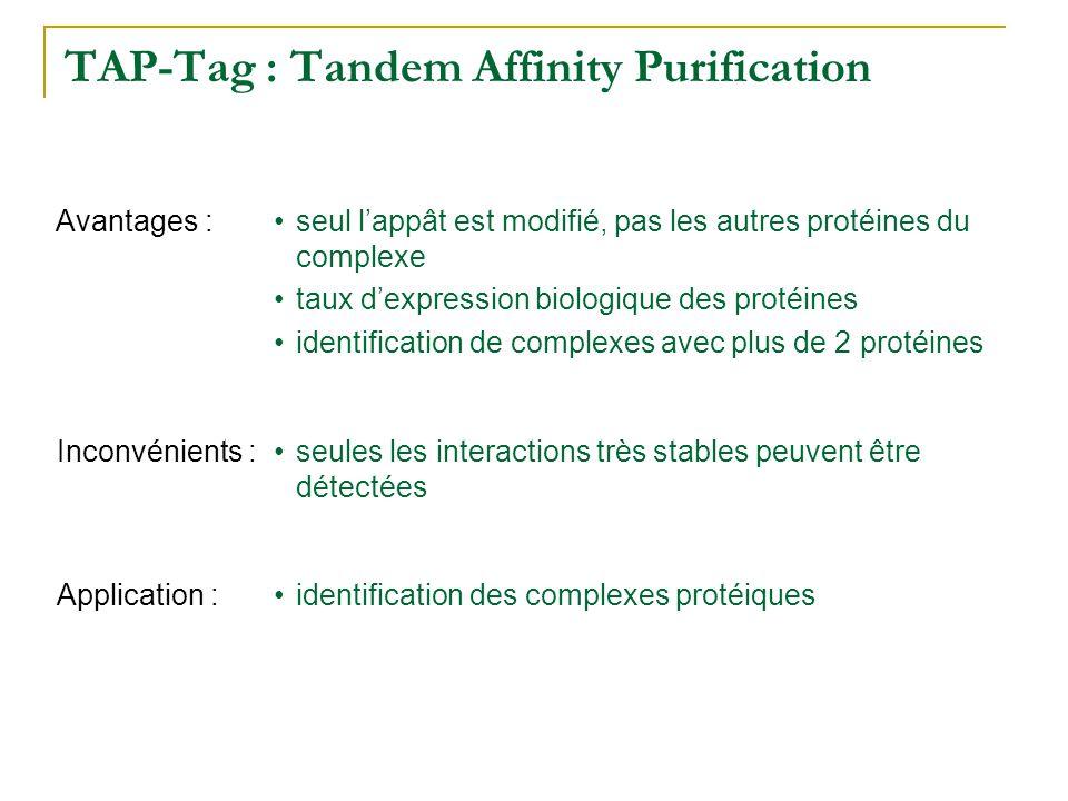 TAP-Tag : Tandem Affinity Purification seules les interactions très stables peuvent être détectées Inconvénients : seul lappât est modifié, pas les au