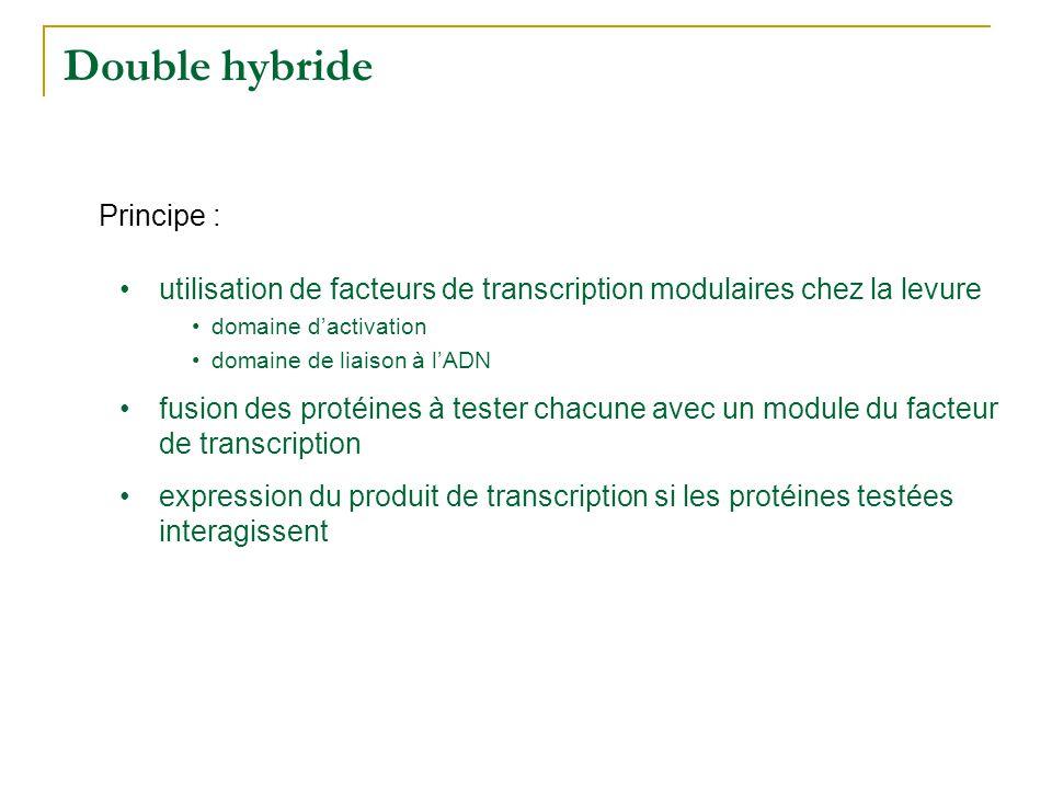 Double hybride DA DL mARN DA : domaine dactivation DL : domaine de liaison à lADN TF Système rapporteur Fusion protéines et modules du facteur de transcription Expression du système DA DL prot 1 prot 2 DL prot 3 pas dexpression expression du gène colonies de levures mARN