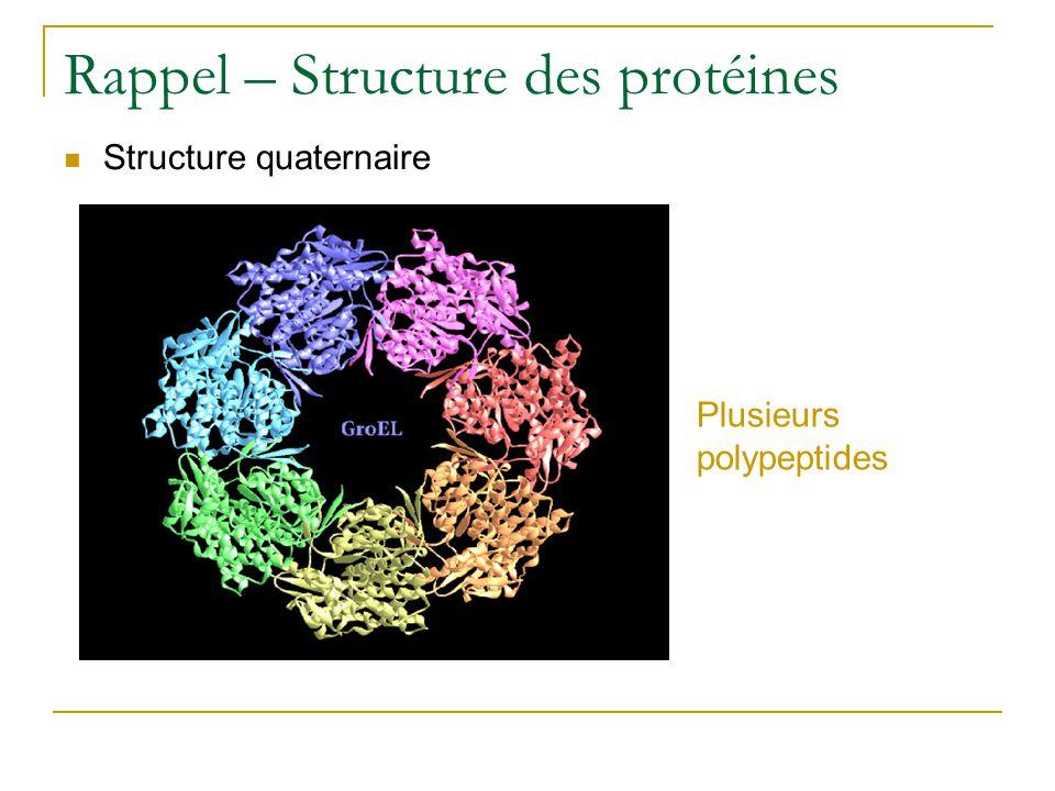 Rappel – Structure des protéines Structure quaternaire Plusieurs polypeptides