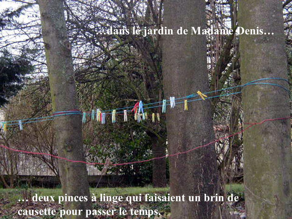 …dans le jardin de Madame Denis… … deux pinces à linge qui faisaient un brin de causette pour passer le temps.