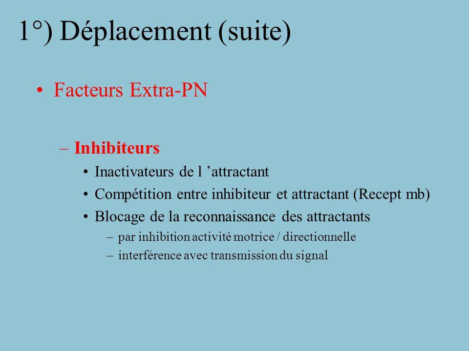 1°) Déplacement Facteurs Extra-PN: –nécessité d adhérer au support (cell endothéliale, fibre de collagène) Attractants: –C5a –Activateur du plasminogène –Fibrinopeptide B –Facteurs produits par: »Cellules endothéliales »Lymphocytes stimulés »Monocytes »PN lors de la phagocytose »Bactéries (N-formyl-methionyl-leucyl-phenyl.