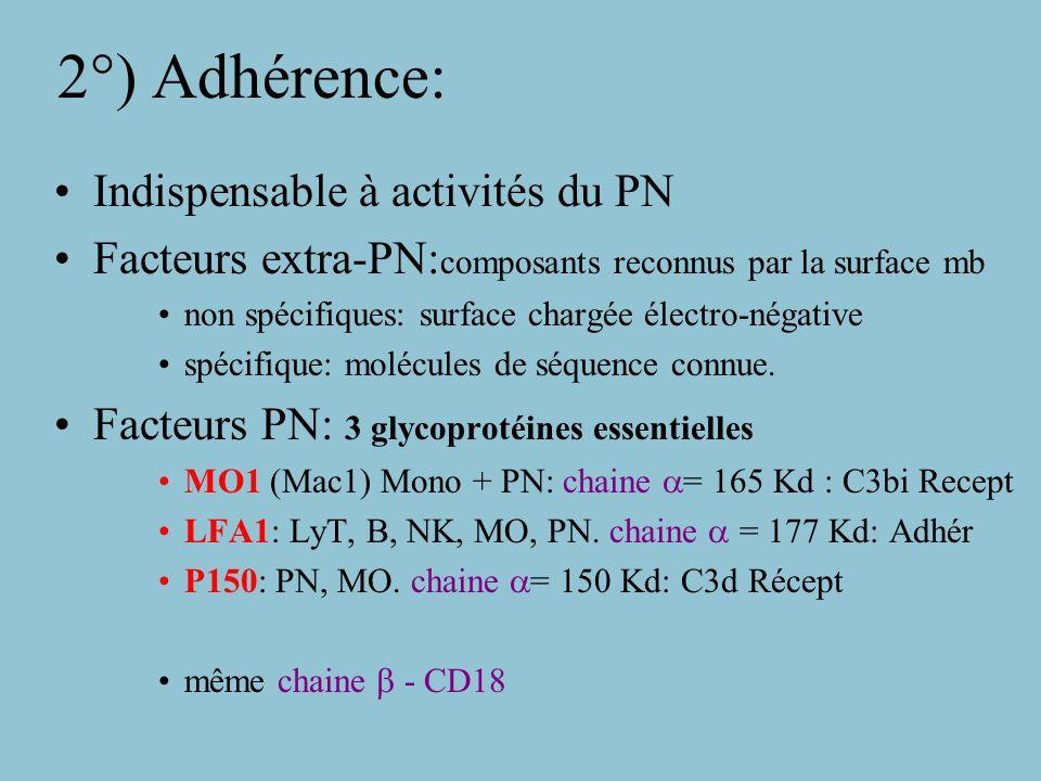 Microfilaments: Actine + Myosine Actine: –soluble ds PN au repos –stimulation= polymérisation et association –induction de tensions de mb créant expansions –Actine polymérisée: réseau tridimensionnel Filaments perpendiculaires assure élasticité du cytoplasme et forme de cellule contraction actine dépend de Myosine Récepteurs: chimio-attractants, signal de transduction