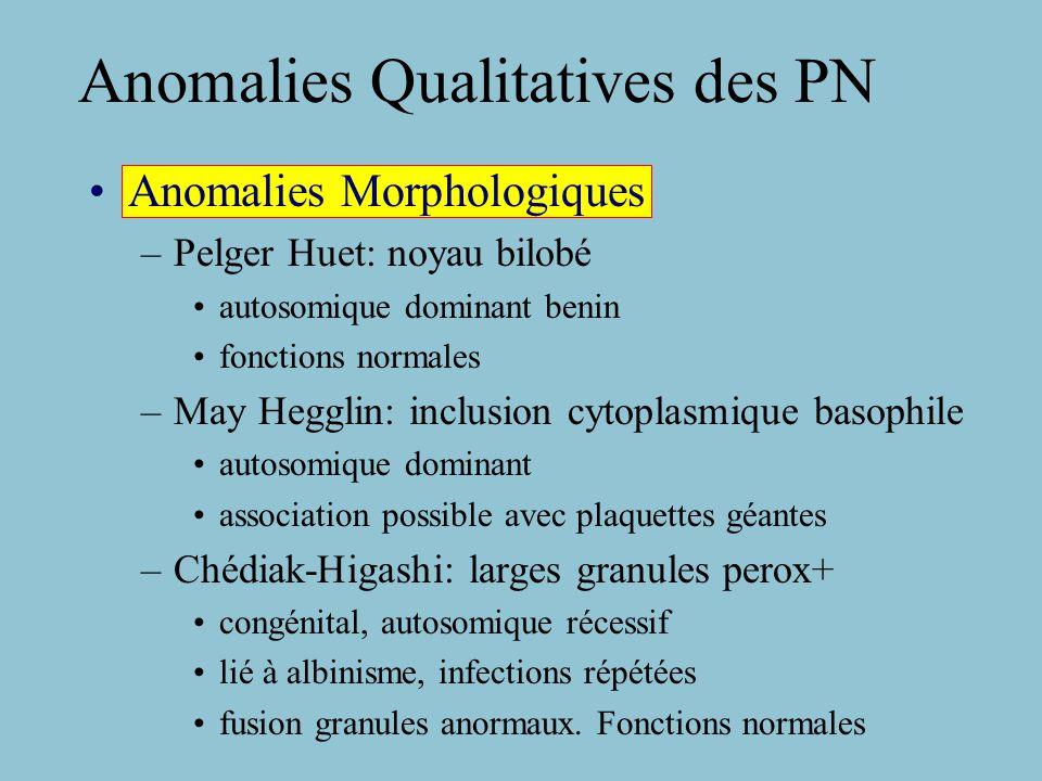Neutropénie Neutropénie congénitale sévère (Kostman) Granolopénie chronique benigne de l enfant (Ac Pn) Neutropénie familiale (inhibiteur plasmatique CFU-GM) Neutropénie familiale chronique (CFU-GM ) Neutropénie néo-natale Iso-Immune (Ac anti PN chez fœtus) Neutropénie auto-immune Neutropénie périodique cyclique Etats pathologiques