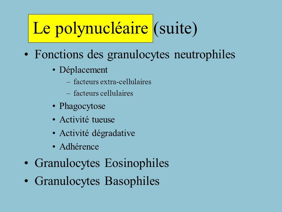 Le Polynucléaire Granulopoièse Neutrophile: Myeloblaste Promyelocyte Myelocyte Métamyelocyte Polynucléaire Marqueurs de différenciation Fonction des Granulocytes