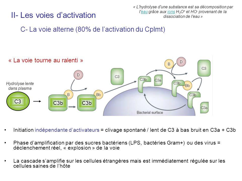 Initiation indépendante dactivateurs = clivage spontané / lent de C3 à bas bruit en C3a + C3b Phase damplification par des sucres bactériens (LPS, bac