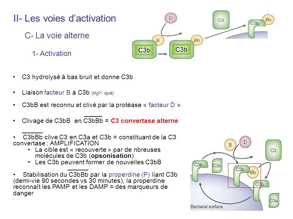 C3 hydrolysé à bas bruit et donne C3b Liaison facteur B à C3b (Mg 2+ - dpdt) C3bB est reconnu et clivé par la protéase « facteur D » Clivage de C3bB e