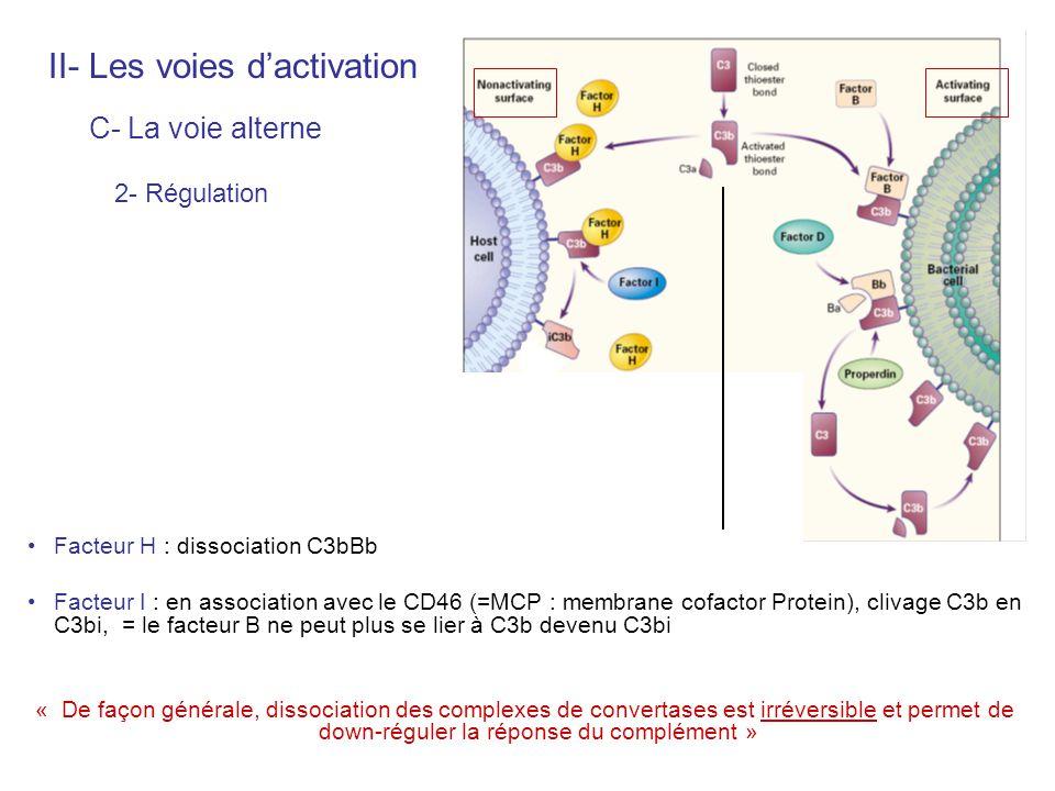 2- Régulation II- Les voies dactivation C- La voie alterne Facteur H : dissociation C3bBb Facteur I : en association avec le CD46 (=MCP : membrane cof