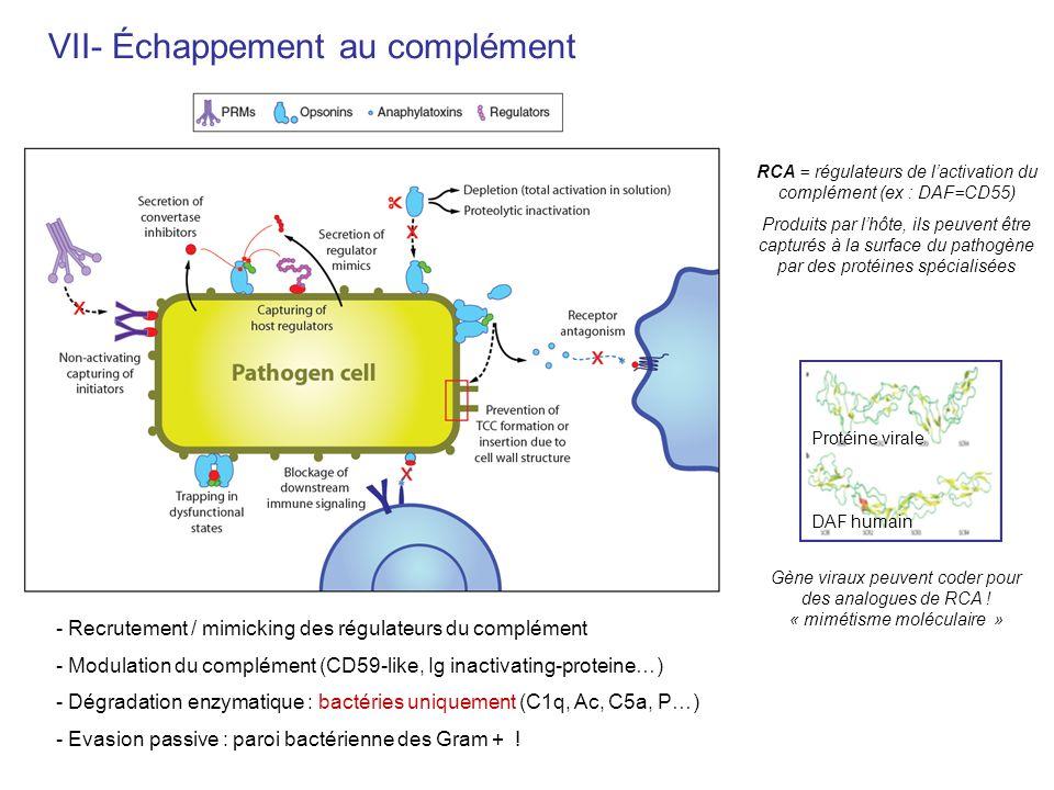 VII- Échappement au complément - Recrutement / mimicking des régulateurs du complément - Modulation du complément (CD59-like, Ig inactivating-proteine
