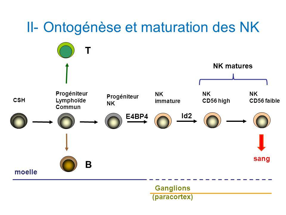 II- Ontogénèse et maturation des NK Progéniteur NK NK immature CSH Progéniteur Lymphoïde Commun B T NK CD56 high NK CD56 faible moelle Ganglions (para