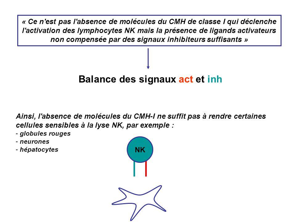 « Ce n'est pas l'absence de molécules du CMH de classe I qui déclenche l'activation des lymphocytes NK mais la présence de ligands activateurs non com