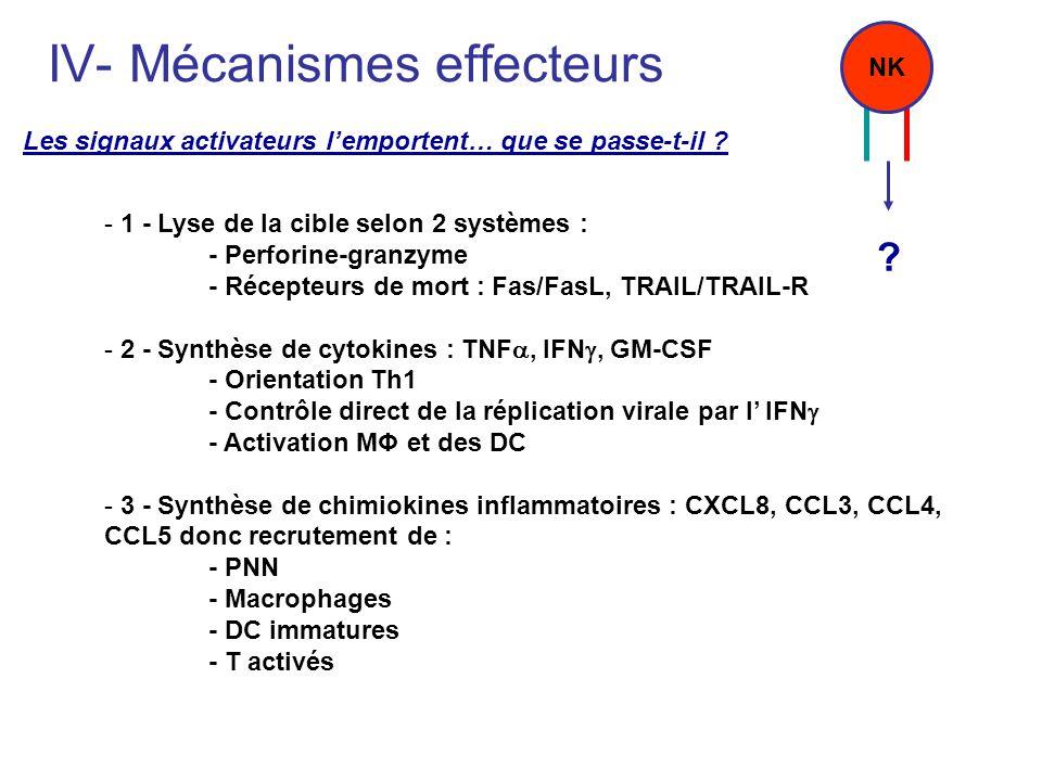 IV- Mécanismes effecteurs - 1 - Lyse de la cible selon 2 systèmes : - Perforine-granzyme - Récepteurs de mort : Fas/FasL, TRAIL/TRAIL-R - 2 - Synthèse
