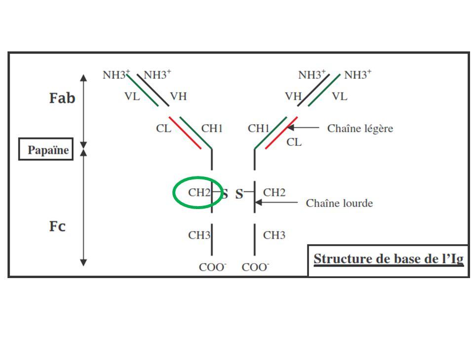 VIII- Pathologies associées au complément HNP : Hémoglobinurie Paroxystique Nocturne Globules rouges plus sensibles à la CDC suite à une mutation génétique rendant CD59 non fonctionnel Hémolyse : anémie, toxicité rénale Eculizumab : IgG4 Bloque le site de clivage de C5 (C5a)
