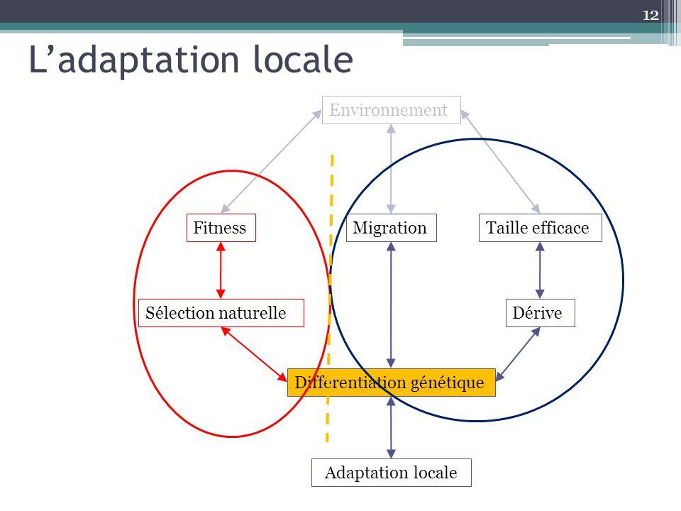 12 Environnement MigrationTaille efficace Adaptation locale Différentiation génétique DériveSélection naturelle Fitness Ladaptation locale