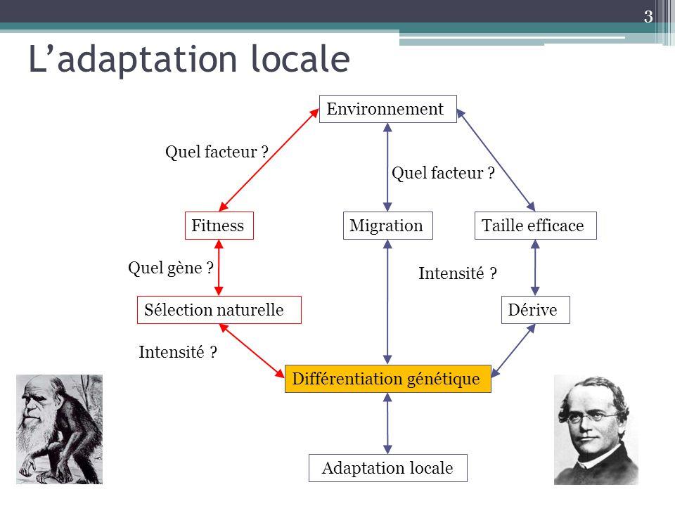 3 Environnement MigrationTaille efficace Adaptation locale Différentiation génétique DériveSélection naturelle Fitness Quel facteur ? Intensité ? Quel