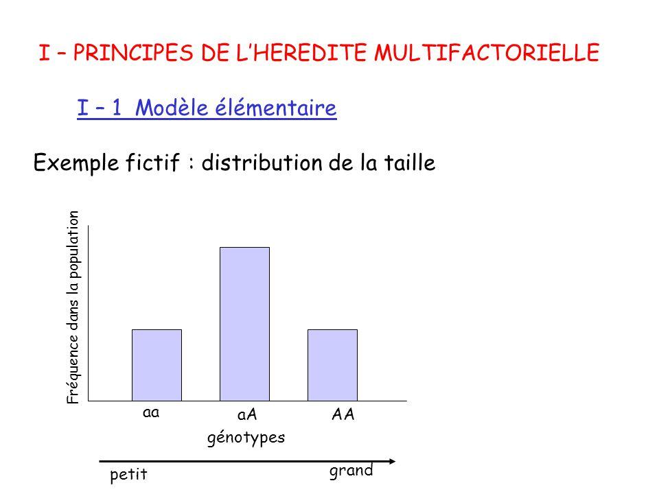I – PRINCIPES DE LHEREDITE MULTIFACTORIELLE I – 1 Modèle élémentaire Exemple fictif : distribution de la taille génotypes petit grand aa aAAA Fréquenc