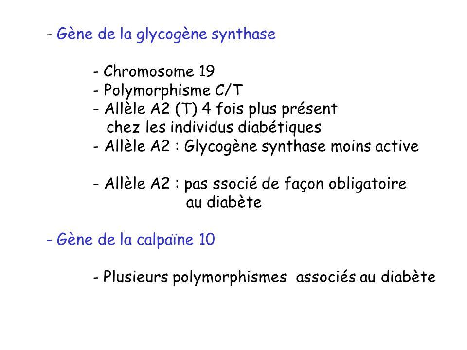 - Gène de la glycogène synthase - Chromosome 19 - Polymorphisme C/T - Allèle A2 (T) 4 fois plus présent chez les individus diabétiques - Allèle A2 : G